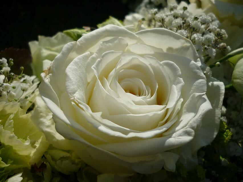 Annet-in-memoriam